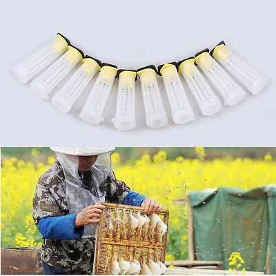 10 Pcs Apiculture Elevage Tasse Reine Bee Cages Apiculteur Equipement Outils BA