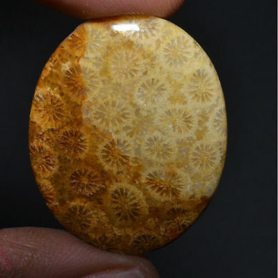 Cts. 30.70 Natural Alluring Fossil Coral Cabochon Oval Cab Loose Gemstone