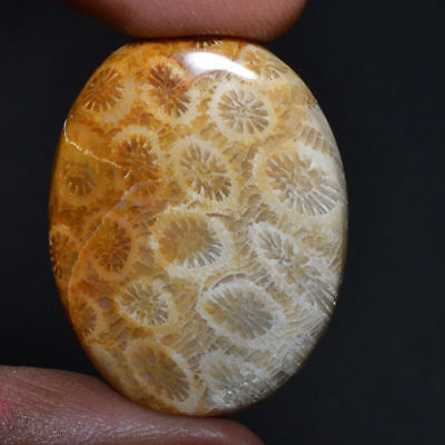 Cts. 33.90 Natural Fantastic Morocco Fossil Coral Cabochon Oval Cab Loose Gemsto