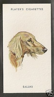 1940 UK Peter Biegel Dog Art Head Study Player Cigarette Card Cream Color SALUKI