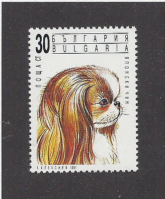 Rare Dog Art Head Portrait Postage Stamp JAPANESE CHIN SPANIEL Bulgaria 1991 MNH
