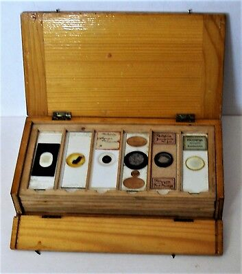 Antique PINE DISPLAY CASE of 36  MICROSCOPE SLIDES