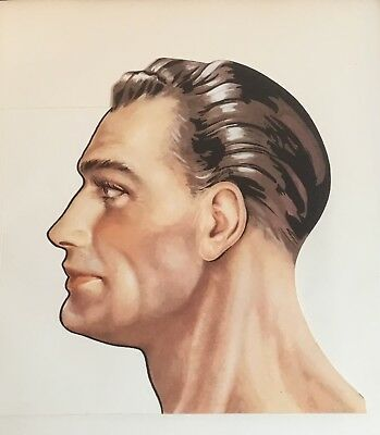Anatomy Medical 3D Book Plate Cut Out Male Head Colour Print Art Vintage Retro