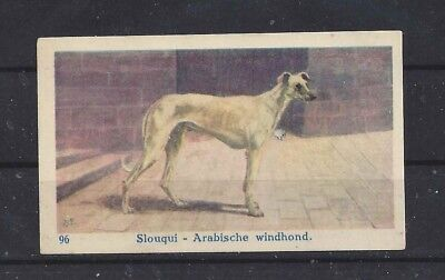 1950s Belgium Belgian Apeka Dog Art Portrait Trade Card SALUKI SLOUGHI
