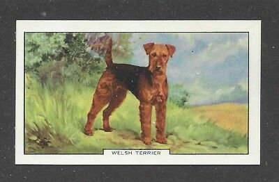 1938 UK Dog Art Full Body Study Gallaher Series B Cigarette Card WELSH TERRIER
