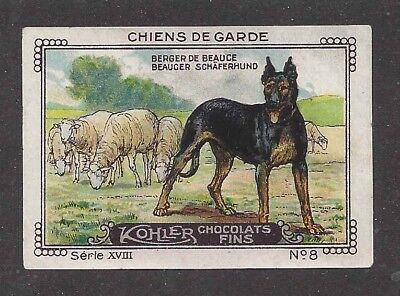 1931 France Nestle Cailler Kohler Dog Card BERGER DE BEAUCE BEAUCERON
