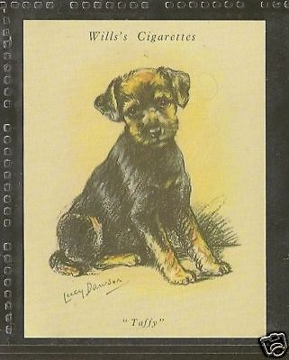 1940 Reissue LUCY DAWSON Dog Art Wills UK Cigarette Card WELSH TERRIER Puppy