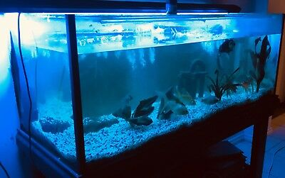 Fish Tank Aquarium Fully Complete 1.2m Wide By 50cm In Width And Depth