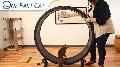 One Fast Cat Exercise Wheel  CHEETAH COLOR