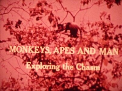Monkeys Apes And Man: Exploring The Chasm 1971 16mm short film