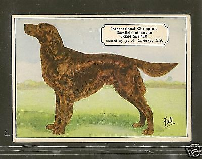 1938 UK Dog Art Photo Hand Colored Ardath Cigarette Card Named Ch. IRISH SETTER