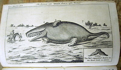 1764 news magazine w engraving  SPERM WHALE that washed up on beach KENT England