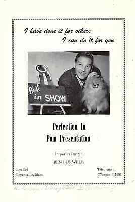 Pomeranian Best in Show Ad Flyer Ben Burnwell Perfection in Pom Presentation