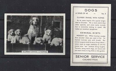 1939 UK Dog Photograph Senior Service Cigarette Card CLUMBER SPANIEL Family Pups