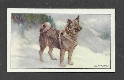 1936 UK Dog Art Full Body Portrait Gallaher Cigarette Card NORWEGIAN ELKHOUND