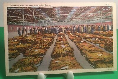 EARLY 1900s POSTCARD OF A TOBACCO SALE AN EVER INTERESTING SCENE