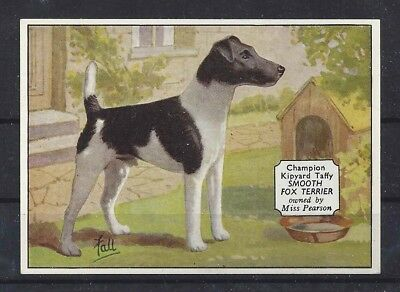 1938 UK Dog Art Photo Hand Colored Ardath Cigarette Card Ch SMOOTH FOX TERRIER