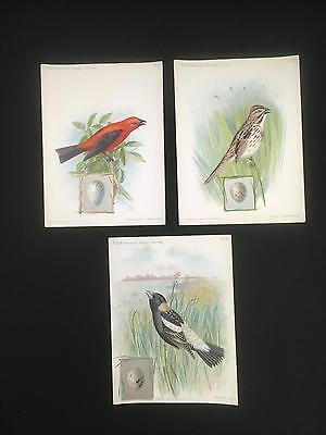 "Lot of 3 SINGER SEWING MACHINE Trade Cards ""AMERICAN SINGER SERIES"" Birds 1898"