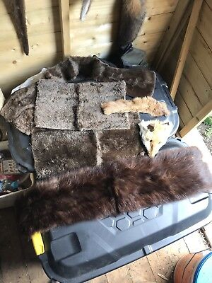 Animal Fur Collection,taxidermy,props,costumes,collectors item