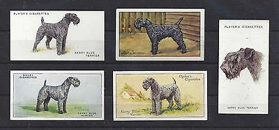 Vintage 1929 - 1940 UK Dog Art Cigarette Card Collection x 5 KERRY BLUE TERRIER