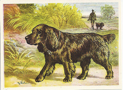 1952 Rare Dog Art Print Austria Tobacco Company Trade Card SUSSEX FIELD SPANIEL