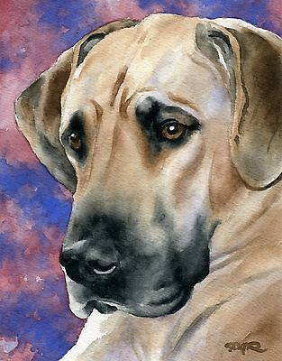 GREAT DANE Dog Watercolor 8 x 10 ART Print Signed by Artist DJR