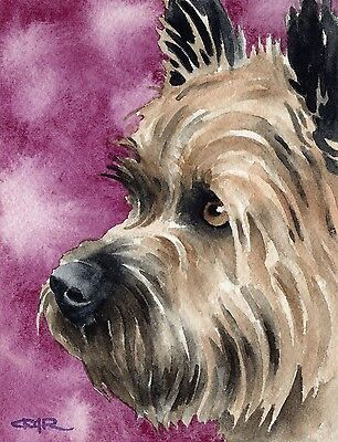 CAIRN TERRIER Watercolor DOG 8 x 10 Art Print Signed by Artist DJR