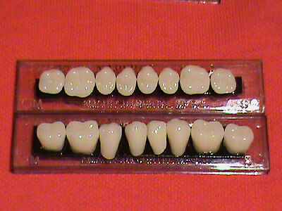 1 Set Acrylic Posterior Denture/false Teeth   Shade  A2  Size 22
