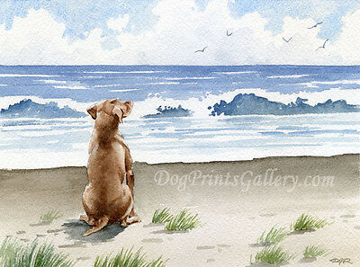 HUNGARIAN VIZSLA DOG Beach Watercolor 8 x 10 Art Print Signed by Artist DJR