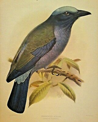 Set of 5 ANTIQUE HAND COLORED LITHOGRAPHS 18th - 20th C Assorted BIRD Species NR