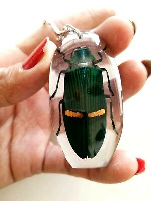 Beetle Real Emerald Taxidermy Green Glow Bug Key Ring Insect Wing Gift Keychain