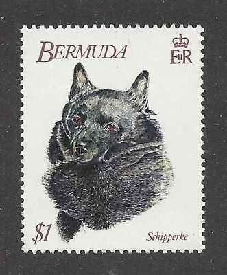 Dog Art Head Portrait Postage Stamp Champion SCHIPPERKE Bermuda 1992 MNH