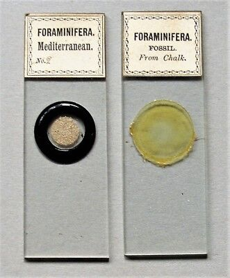 2 x  Antique Microscope Slides by SMITH,BECK & BECK,  FORAMS, ex Chalk & Med.Sea