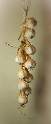 String of Garlic Bulbs - Artificial Fake Vegetables - Realistic Looking Decor