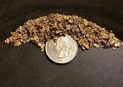 Premium Nugget Gold Paydirt - Look for MASSIVE Gold Nuggets