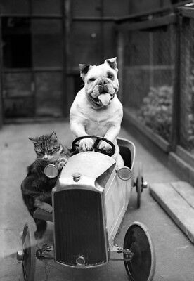 Unusual, Funny, Cute, DOG AND CAT RIDING IN PEDAL CAR/4X6 B&W Photo Reprint/#D42