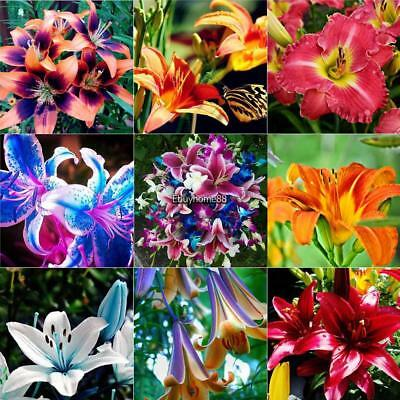 20Pcs Home Gardening Balcony Bonsai Mix Colors Lily Flower Seed EHE8