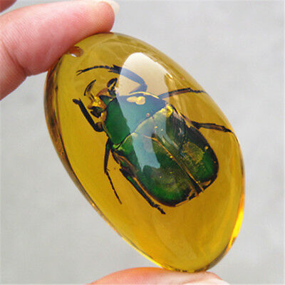 Beautiful Amber  beetle  Fossil Insects Manual Polishing .