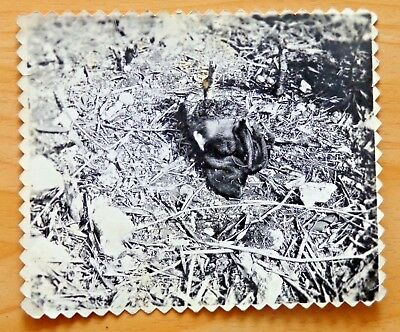 Warning Horrific Wwii Photo Head Cut Off Of Dead Japanese Enemy Soldier Saipan R