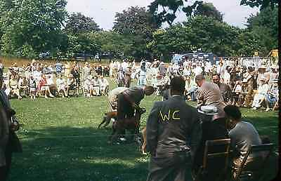 KODACHROME Red Border 35mm slide Dog Show People Fashion Suit 1947 1940s