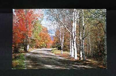 Autumn Leaves Peaceful Country Road VERMONT Fall Colors Foliage Vintage Postcard