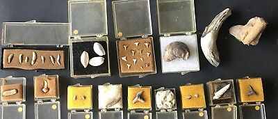 Old Fossil Collection 35 Pieces