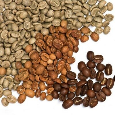 100Pcs Coffee Bean Plant Seeds Jamaica Blue Mountain Coffee Bean Seeds