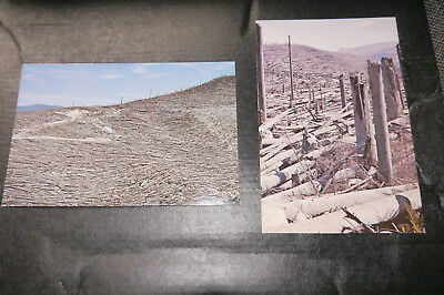 2 postcards - Damage when Mount St. Helena erupted