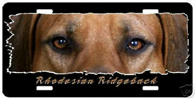 "Rhodesian Ridgeback "" The Eyes Have It ""  License Plate"