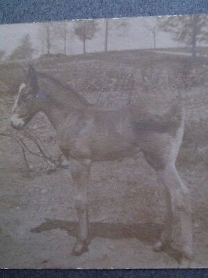 Miniature Cabinet Card of a Horse in the Fields
