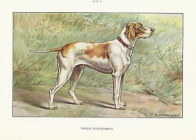 1930s Watercolor Art Print Dog Castellan BRAQUE SAINT GERMAIN - ENGLISH POINTER