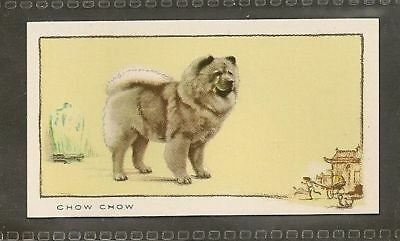 Rare 1934 Dog Art Full Body Study Gallaher Cigarette Trade Card Red CHOW CHOW