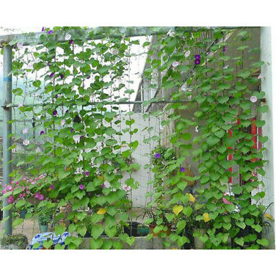 Plant support net for climbing plants vegetables flowers pea bean tomato