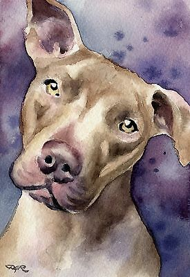 PIT BULL Dog Watercolor 8 x 10 ART Print Signed by Artist DJR